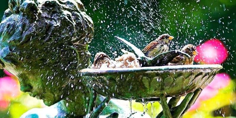 Hogyan lehet madárbarát kertünk